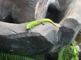 Green Geckos