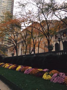New York Public LIbrary pretty
